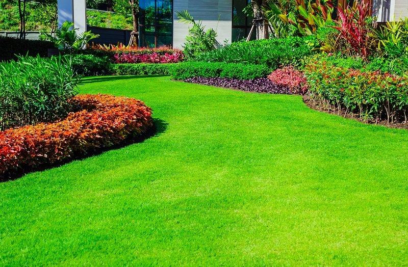 Piękny trawnik - czy to trudne?