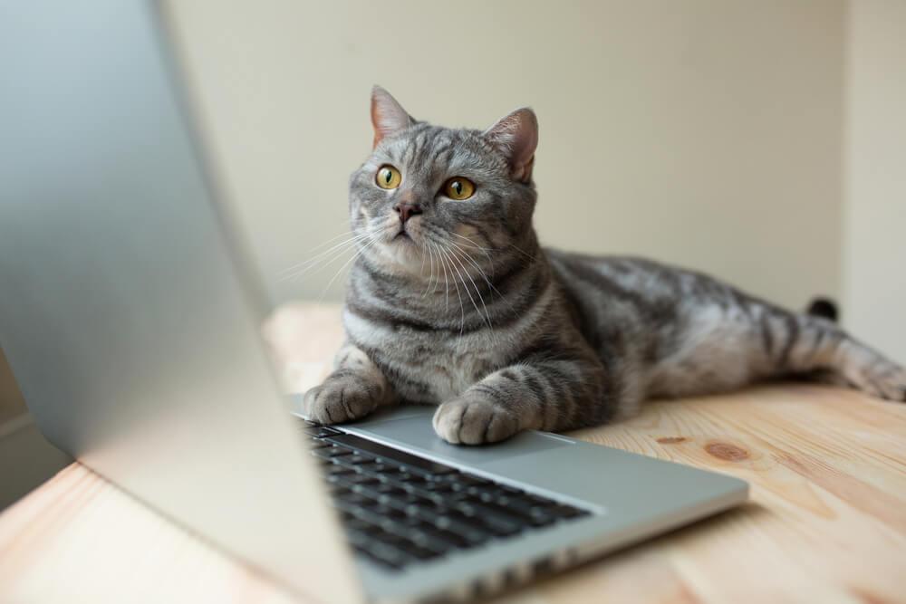 W jakim wieku nalezy wykastrowac kota